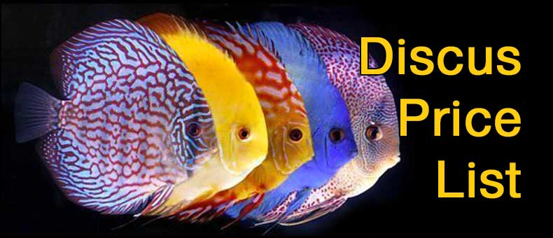 discus-price-list 7-reasons-why-discus-are-expensive