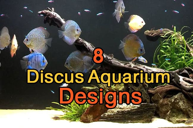 discus tank requirements 8 tank designs