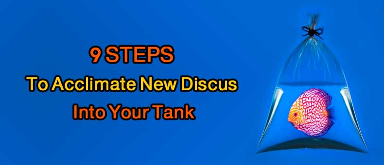 9 steps how to accumulate new discus in your tank