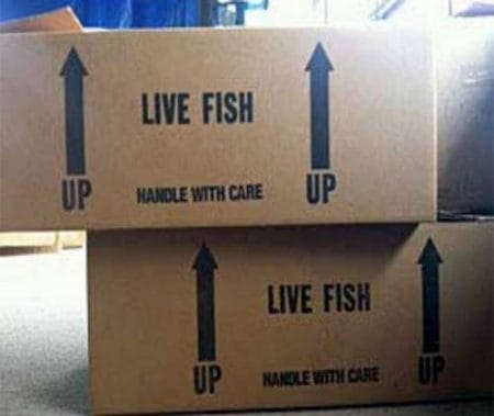 live Discus fish boxes overseas shipment