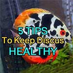 Healthy discus environments tips