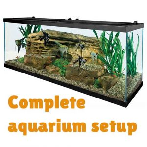 complete-discus-aquarium-setup + complete kit